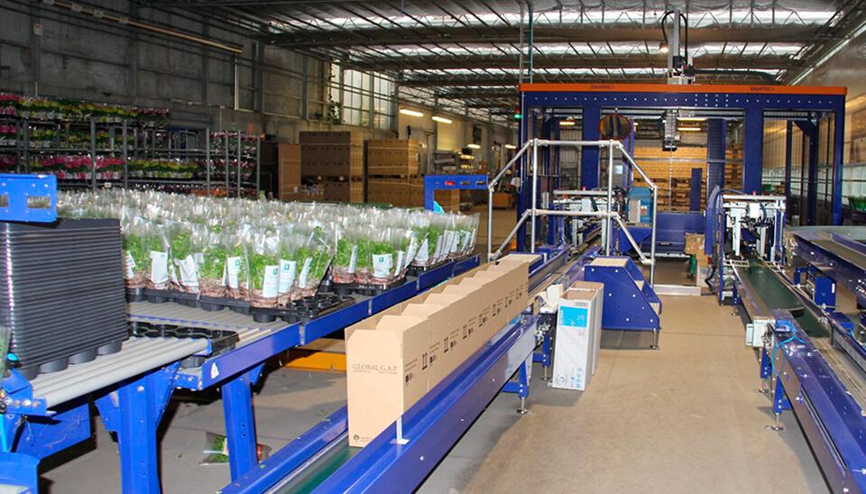 Automatisk pakning-krydderurter
